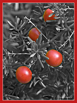 Red Berries by Jorge Gaete