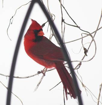 Red Bird on a Vine Original by Diane Merkle