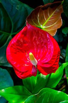 Red Botanical by Kristy Creighton