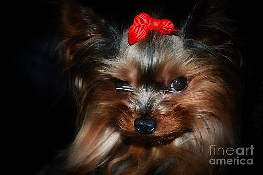 Red Bow by Gail Bridger