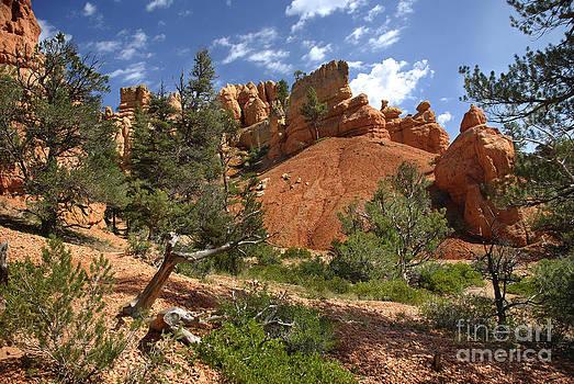 Red Canyon by Jason Kolenda