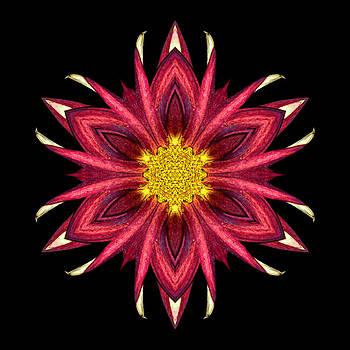 Red Chrysanthemum III Flower Mandala by David J Bookbinder