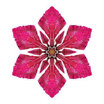 Red Clematis I Flower Mandala White by David J Bookbinder