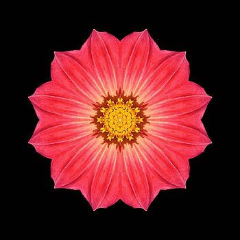 Red Dahlia Hybrid I Flower Mandala by David J Bookbinder
