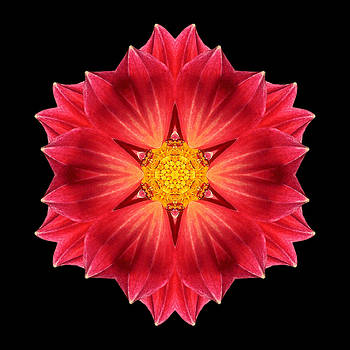 Red Dahlia Hybrid III Flower Mandala by David J Bookbinder