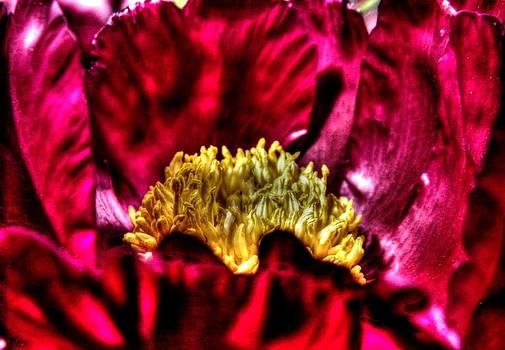 Red by Deborah Knolle