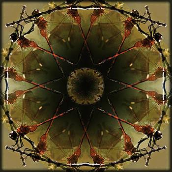 Red Dragonfly Medicine Wheel by Brenda Gutierrez Moreno