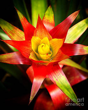 Red Exotic Flower 2 by Eyzen M Kim