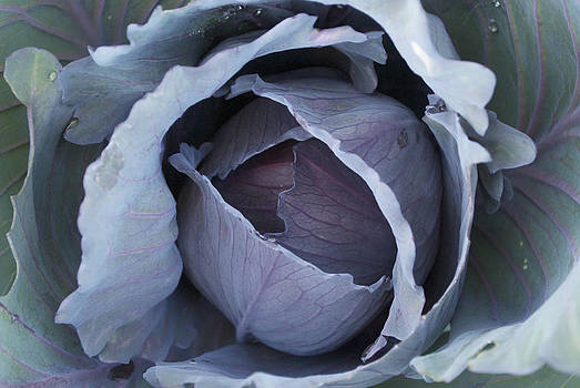 Red Express Cabbage by Steve Masley