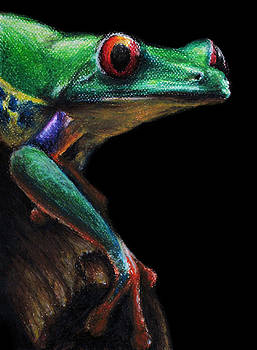 Red-eyed Tree Frog by David Joffe