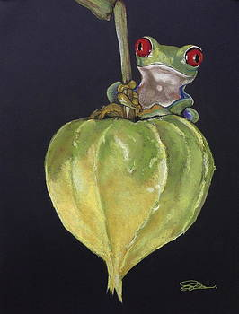 Red-Eyed Tree Frog on Seed Pod by Cristel Mol-Dellepoort