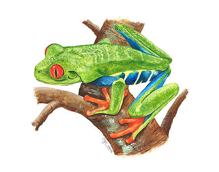 Red-eyed Treefrog by Cindy Hitchcock