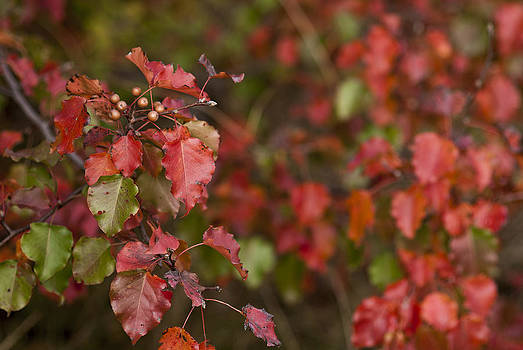 Red Fall by Lisa Missenda