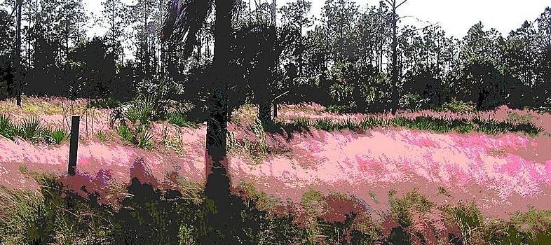 G Linsenmayer - Red Fire Grass Field Gulf Coast Florida