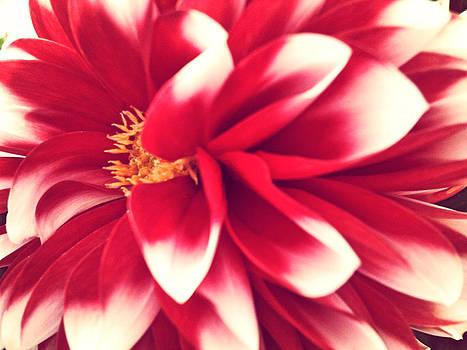 Red Flower by Beril Sirmacek