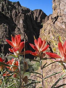 Steven Ralser - red flowers