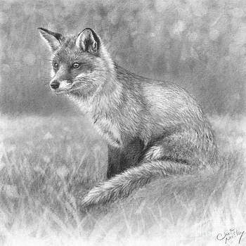 Red Fox in Meadow by Chris Mosley