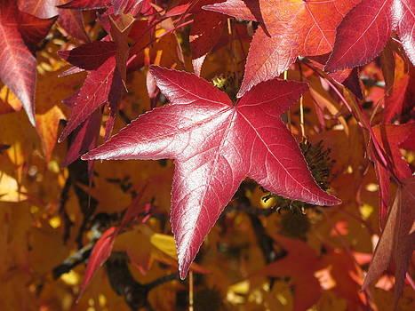Red Gum Leaves by Clifton Keller