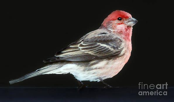 Red Head by Arnie Goldstein