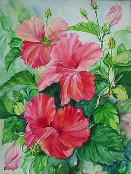 Red Hibiscus by Barbara Bullard