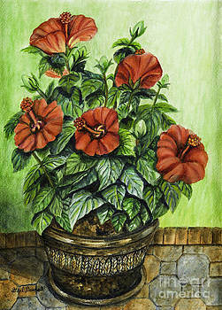 Red Hibiscus by Gail Darnell