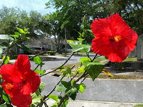 Buzz  Coe - Red Hibiscus in the Neighborhood II