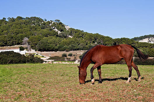 Pedro Cardona Llambias - Red hair horse in Minorca - Red in green