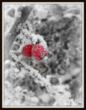 Red in the Wonderland by Heidi Manly