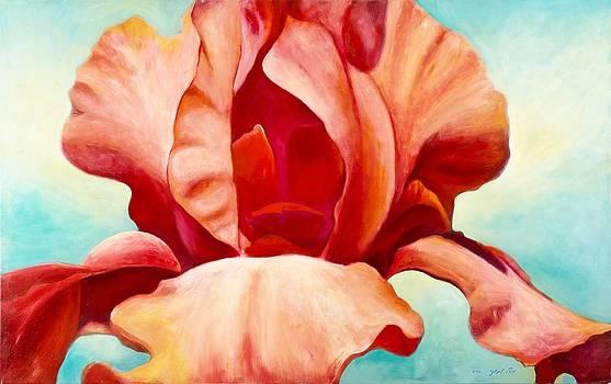Red Iris 2 by Michal Shimoni