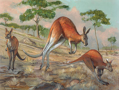Red Kangaroo by ACE Coinage painting by Michael Rothman