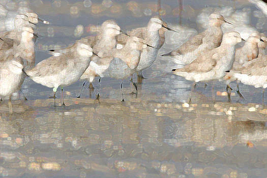 Red Knots by Bob Richter