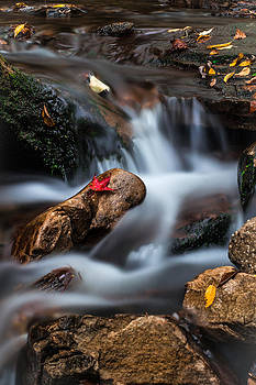 Red Leaf by Anthony Thomas