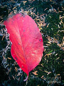 Red Leaf by Colleen Kammerer