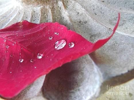 Red Leaf by Maideline  Sanchez