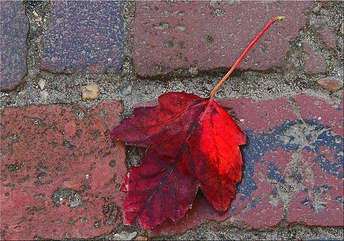 Red Leaf On Red Brick by Chet King
