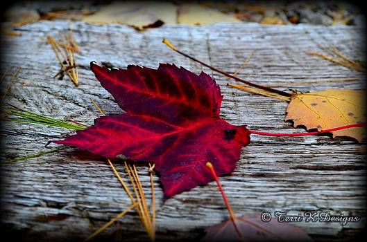 Red Leaf by Terri K Designs