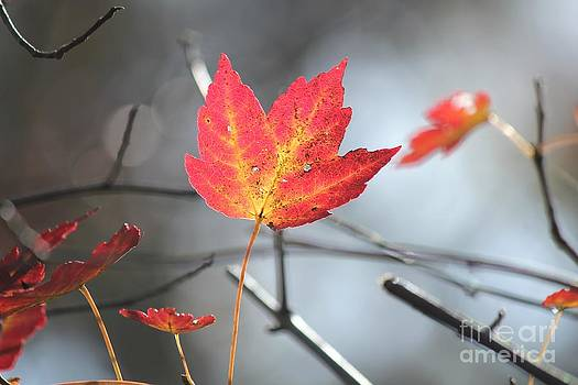 Red Leaf by Theresa Willingham