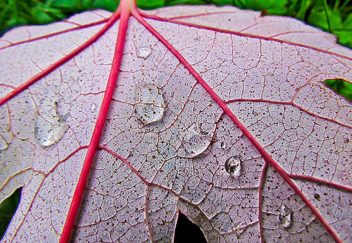 Red Leaf With Raindrops by Eva Kondzialkiewicz
