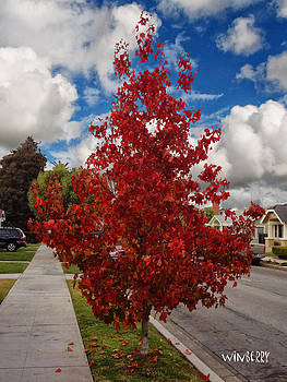 Red Leaves by Bob Winberry