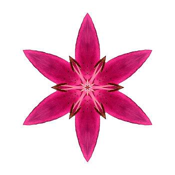 Red Lily I Flower Mandala White by David J Bookbinder