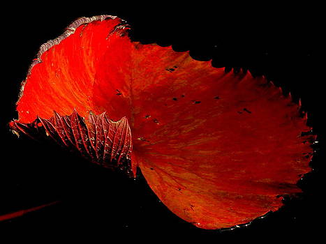 Red Lily Pad by Michael Rudolf