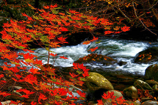 Randall Branham - RED MAPLE STREAM