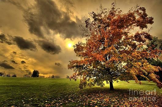 Ludmila Nayvelt - Red Maple Tree