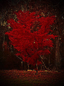Red Maple Tree Too by Lisa Cortez