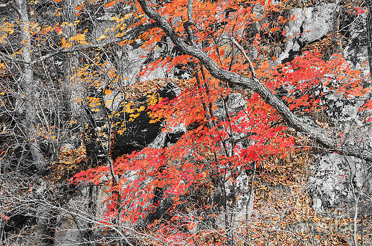 Red Maple Tree by Vorakorn Kanokpipat