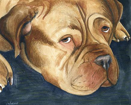 Dogue de Bordeaux by Christine Winship