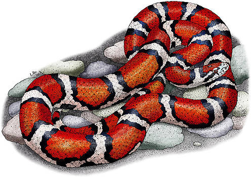 Red Milk Snake by Roger Hall