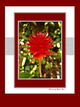 Red nature by Victor Daniel  Rosas Flores