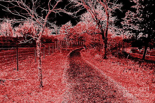 Red Night Trail by Mickey Harkins