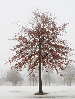 Red Oak in Winter by Lori Frisch